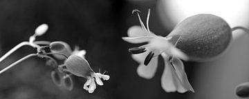 Conversations florales von Martine Affre Eisenlohr