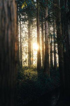 Sonnenaufgang im Wald II von Isa V