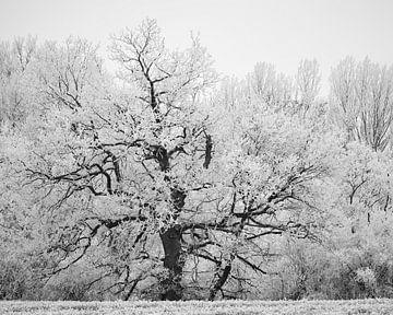Winter-Texturen von Keith Wilson Photography