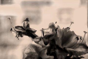 Michael Detter-Flowers2 von Michael Detter