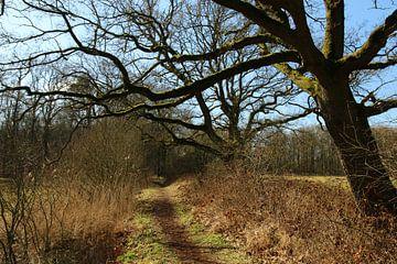 Fraai gevormde boom  in natuurgebied van Pim van der Horst