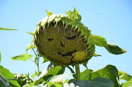 Lachende Zonnebloem van