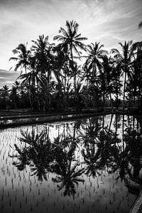 De prachtige palmbomen van Bali. van