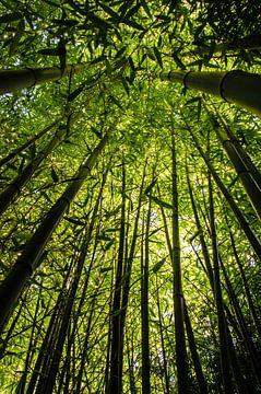 Bambus von Tanja de Boer