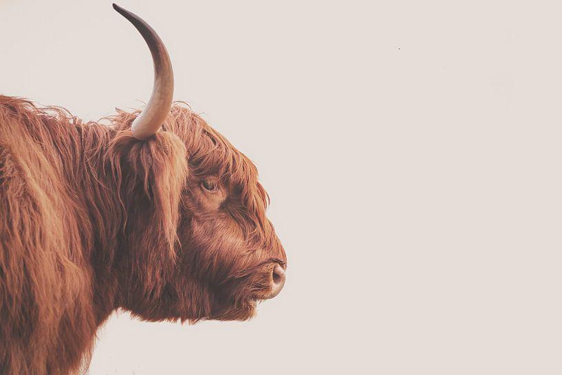 Schottischer Highlander-Bulle von Sander van Driel