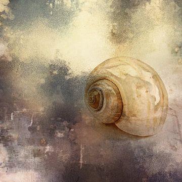 De schelp. van Yolanda Bruggeman