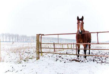 Winter Horse von Steven De Baere