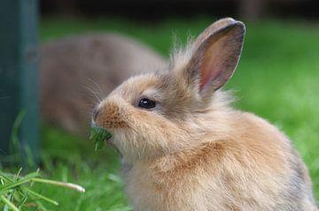 Portret van een schattig jong konijntje van cuhle-fotos