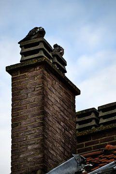 Duiven / Pigeons / pigeon von melissa demeunier