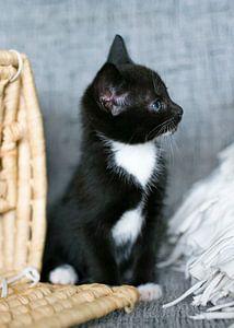 Zwartwit kitten op de grijze bank met rieten mand van