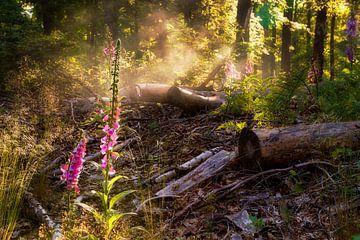 Vingerhoedskruid in de ochtendnevel van Epic Photography
