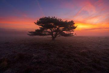Mistige zonsopkomst Veluwe van Rick Kloekke