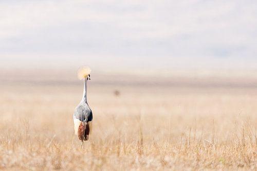 Kraanvogel in open veld van