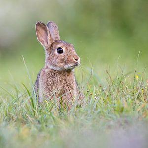 Lief konijn