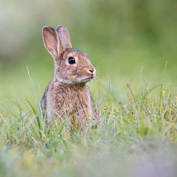 Lief konijn von Pim Leijen