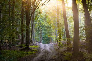 Waldweg auf Insel Rügen von Martin Wasilewski