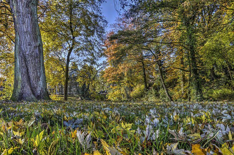 Herfst bij de Singel in Deventer van Frans Blok