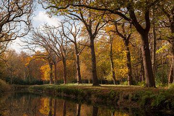 Laubfall im Herbst von Mario Lere
