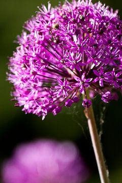 Paarse bloem van Dennis Claessens