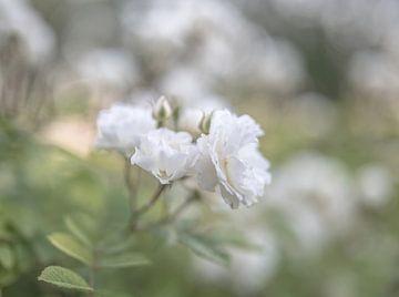 Blumen Teil 147 von Tania Perneel