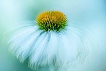 Fleur en mouvement sur Francis Dost