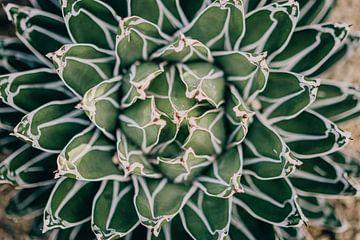 Agavenpflanze von Sabine Keijzer