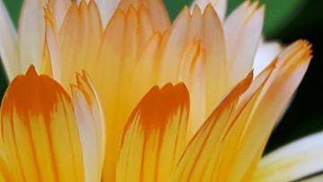 Flowers sur Gerhilde Mulder