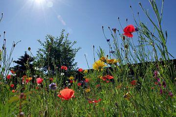 Bunte Blumenwiese und blauer Himmel von Anja Uhlemeyer-Wrona