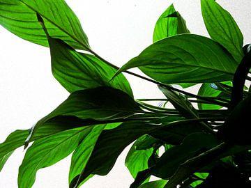 Kamerplant: Lepelplant 1 van MoArt (Maurice Heuts)