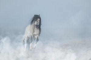 Mini-Pferd am Strand.