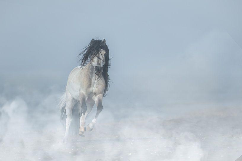 Mini-Pferd am Strand. von ingrid schot