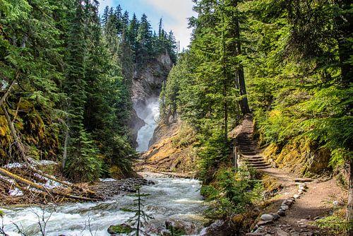 Wandelpad naar de waterval, Bear Creek Falls, Canada