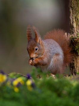 Eichhörnchen von Roelinda Tip