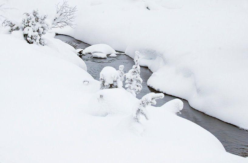 Waterspreeuw (Cinclus cinclus) in de winter van Beschermingswerk voor aan uw muur