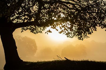 Herfst van Frans Scherpenisse