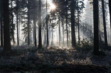 sunbeams in winter landscape