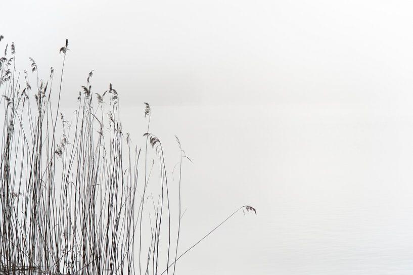 Calmer Reed sur Wim Slootweg