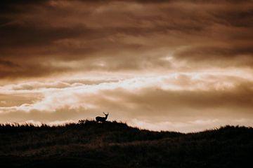 Hirsche unter dunklen Wolken, Amsterdam Wasserversorgung Dünen von Michiel de Bruin