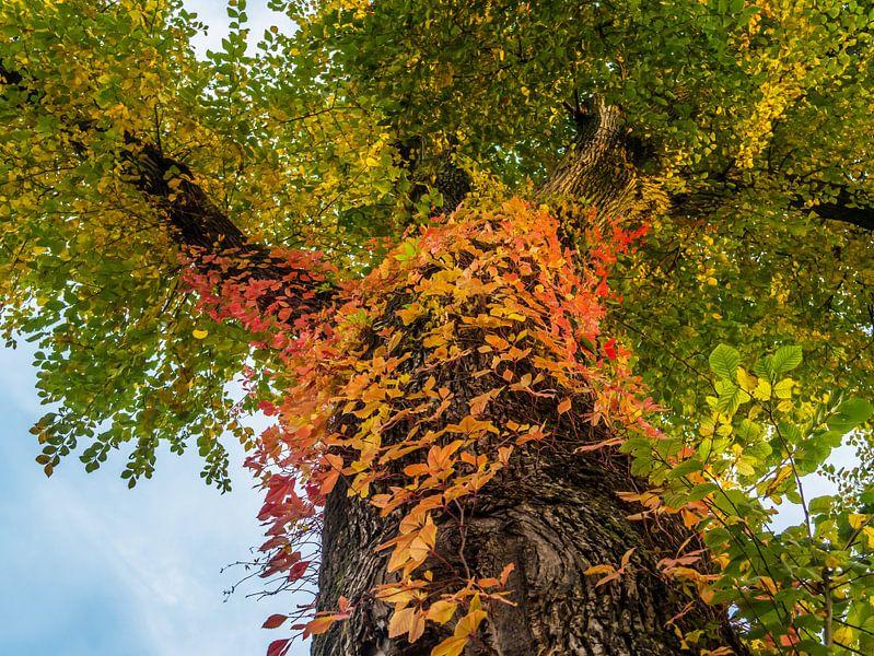 Boom met veelkleurige bladeren op de stam van Ronald Smits