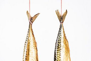 hängende Makrelenschwänze von MICHEL WETTSTEIN
