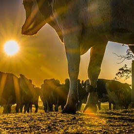 Lever de soleil à la ferme # 1 sur Michiel Leegerstee