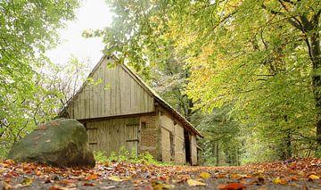 oude schuur in het bos van cindy kuiphuis