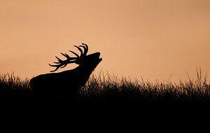 Hert bij ondergaande zon