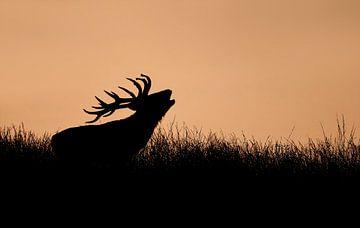 Hert bij ondergaande zon von Michel de Beer
