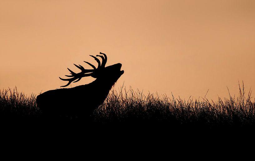 Hert bij ondergaande zon van Michel de Beer