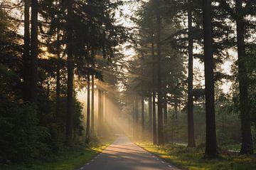 Morgenlicht auf der Veluwe von Charlene van Koesveld