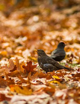 autumn bird van leon mulder