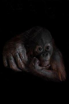 Ein nachdenkliches trauriges Orang-Utan-Jungtier ist traurig, stützt seinen Kopf mit der Hand ab, di von Michael Semenov