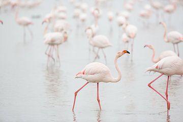 Flamingo's in de ochtend van Kris Hermans