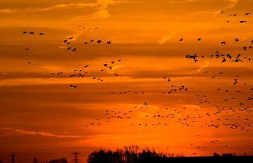vogels in de ochtendzon 1